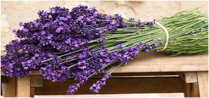 Plant Therapy® Essential Oils